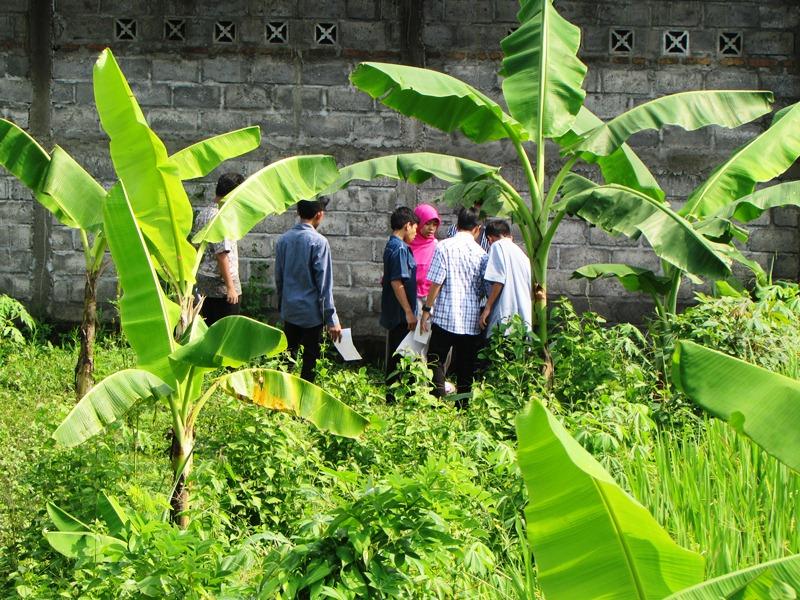 3. Penjelasan tentang tanaman yang terserang hama atau penyakit