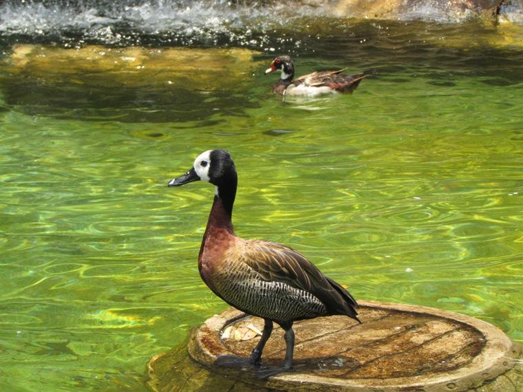 Caroline Duck